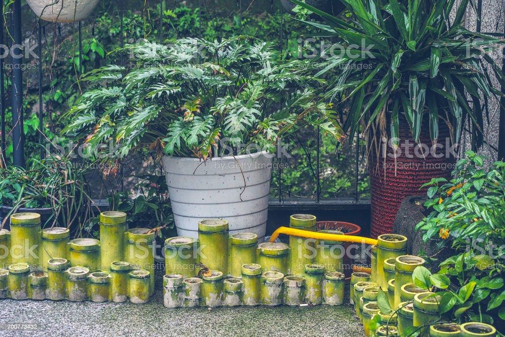 Xanadupflanze Mit Bambus Topf Dekoration Im Regen Stock Fotografie