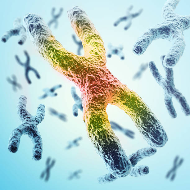 X-chromosomes as a concept for  human biology   medical symbol stock photo