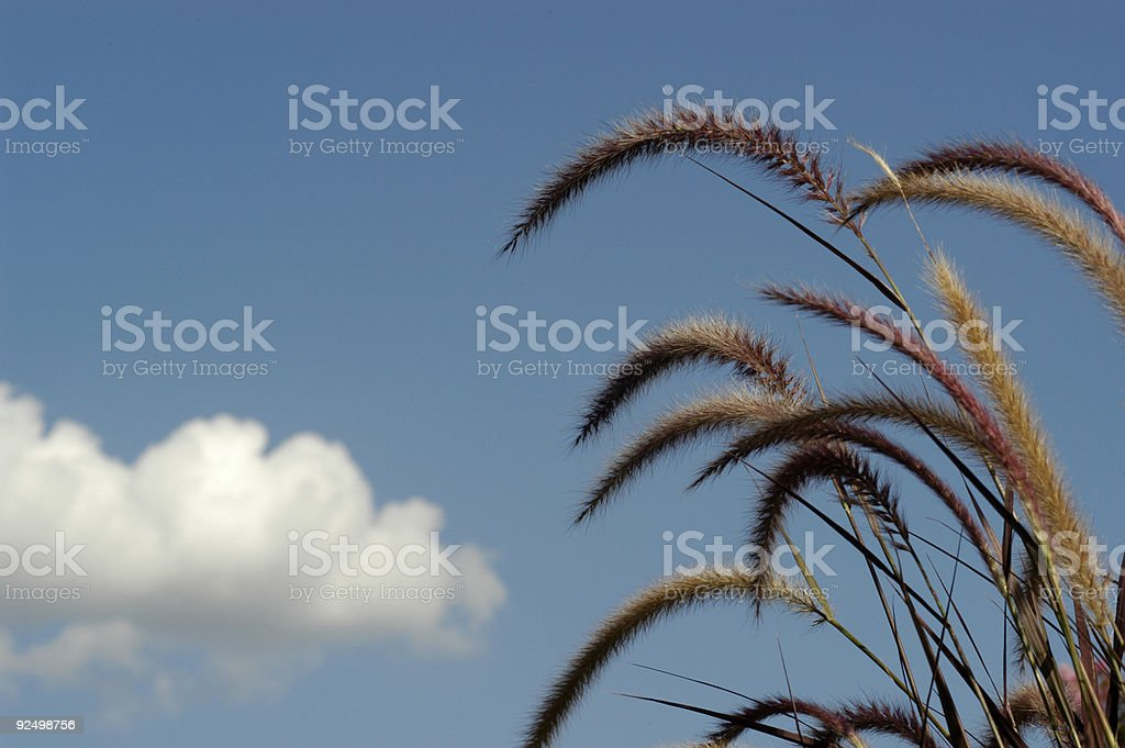 Xeriscape royalty-free stock photo