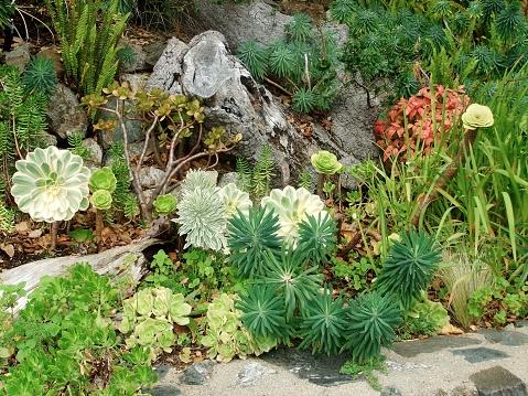 xeriscape using succulents in garden