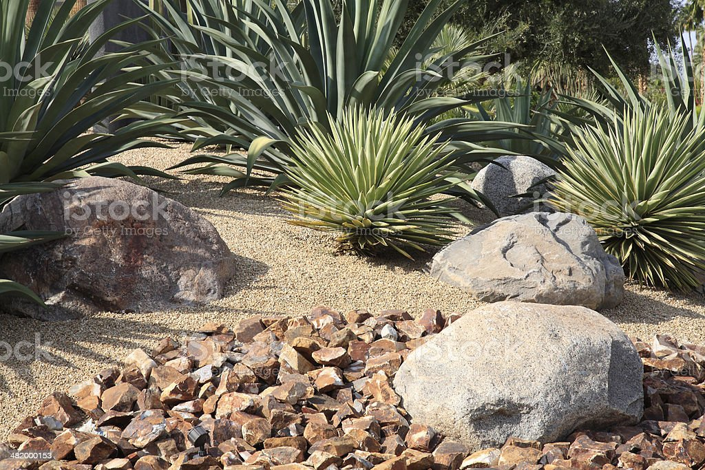 Xeriscaping With Cactus,Succulents And Rocks stock photo