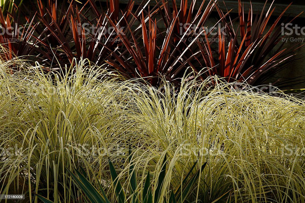 Xeriscaping With Ornamental Grass In The Garden royalty-free stock photo