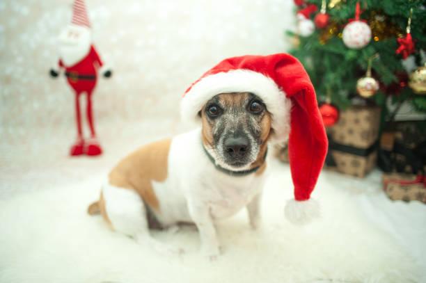 Xmas dog stock photo