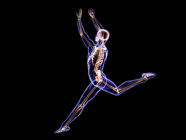 X-Ray Ballerina stock photo