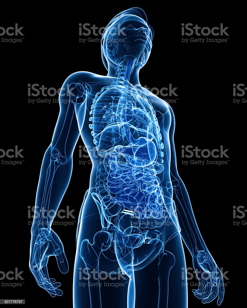 Xray digestive system of male body artwork stock photo