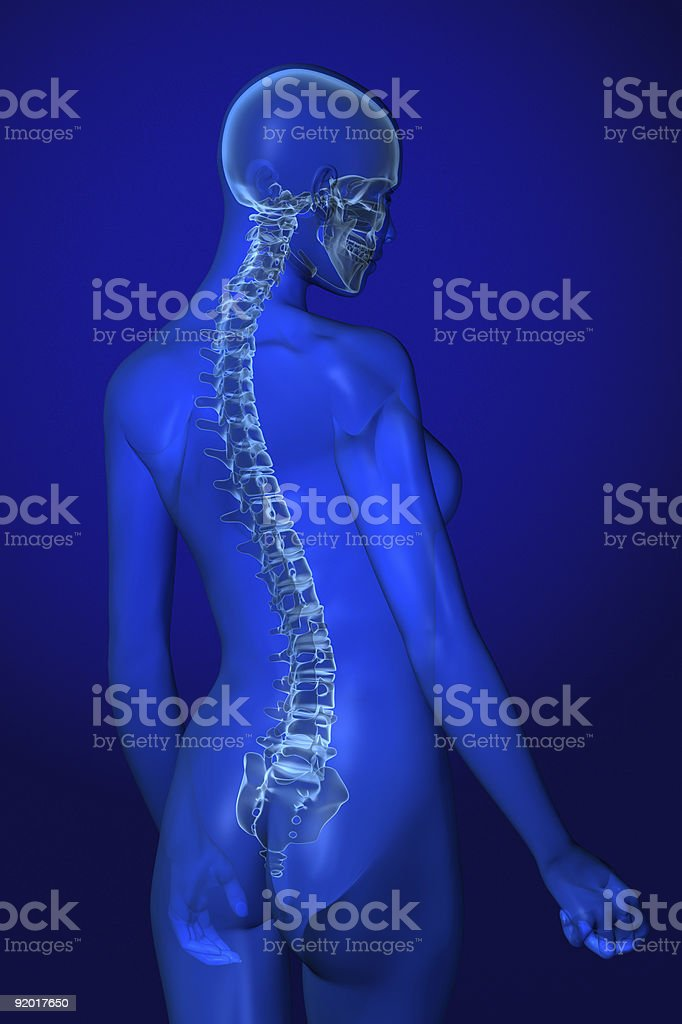 X-ray Female Anatomy on Blue royalty-free stock photo