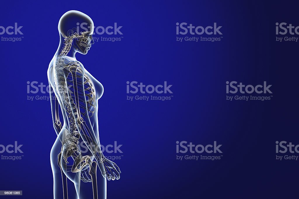 X-ray female anatomy over a blue background royalty-free stock photo