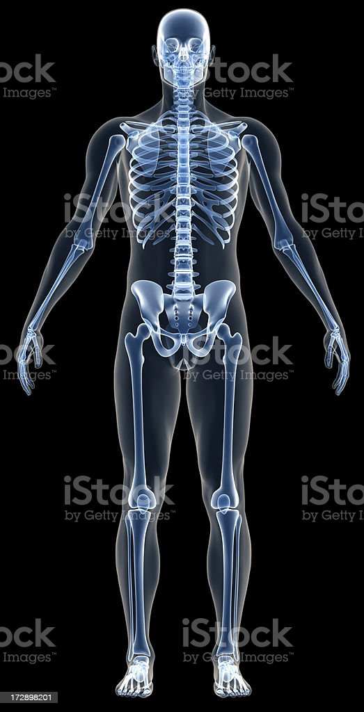 Xray Human Body Of A Man With Skeleton For Study Stock Photo & More ...