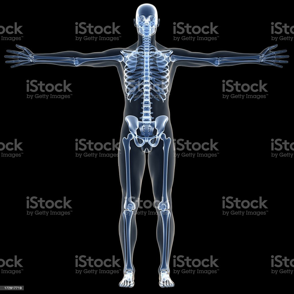 X-ray human body of a man with skeleton for study royalty-free stock photo
