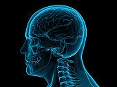 istock X-ray human brain, 3d illustration 613676826