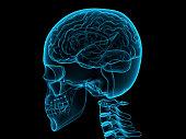 istock X-ray human brain, 3d illustration 613676844