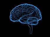 istock X-ray human brain, 3d illustration 613676860