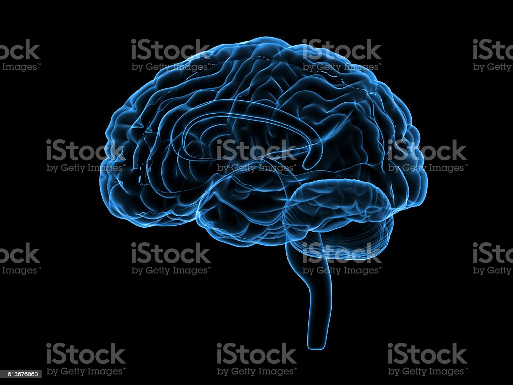 X-ray human brain, 3d illustration stock photo