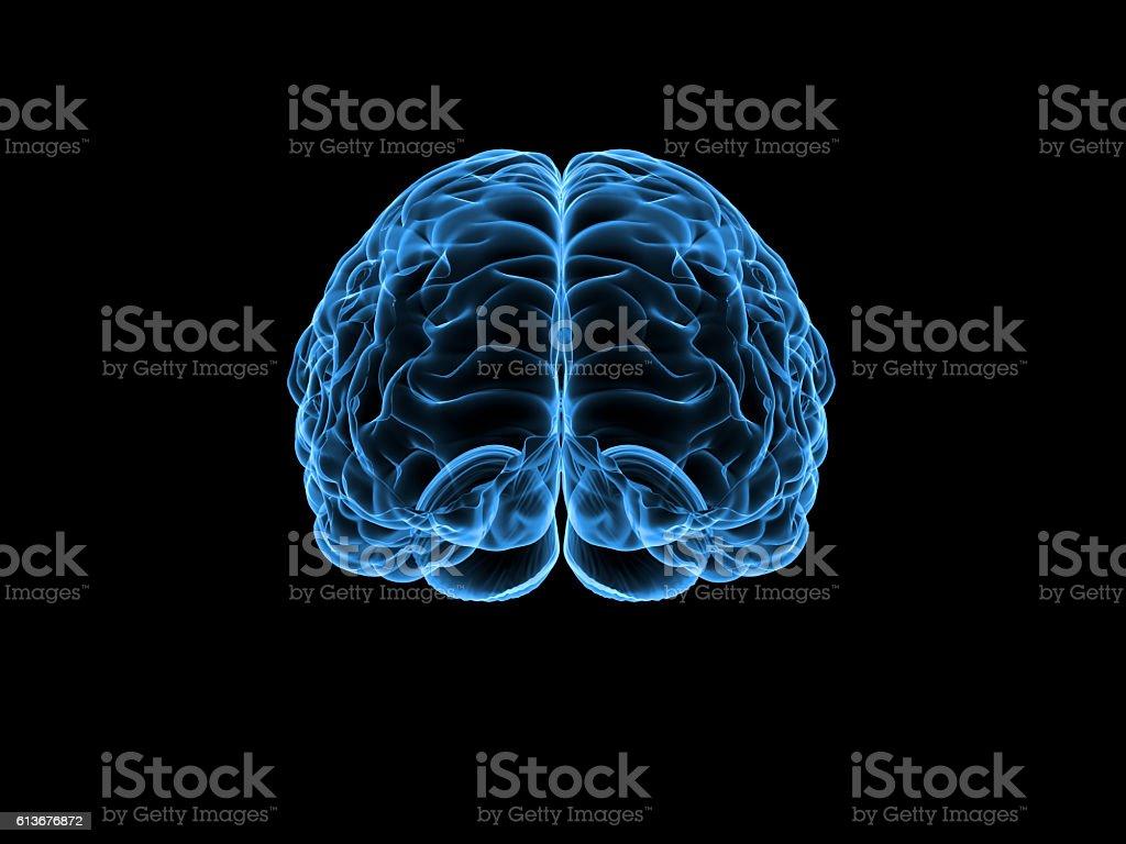 X-ray human brain, 3d illustration stock photo