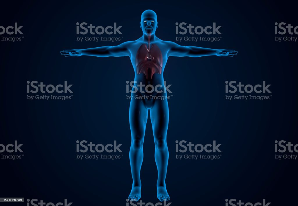 X-Ray Human Organs vector art illustration