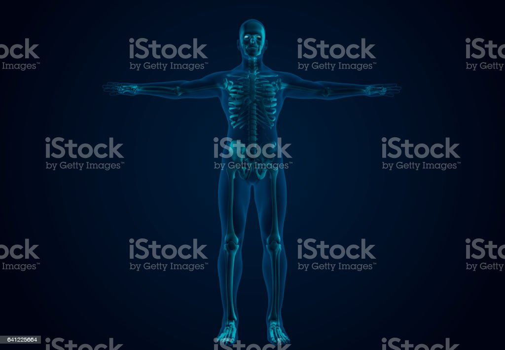 X-Ray Human Skeletal System stock photo