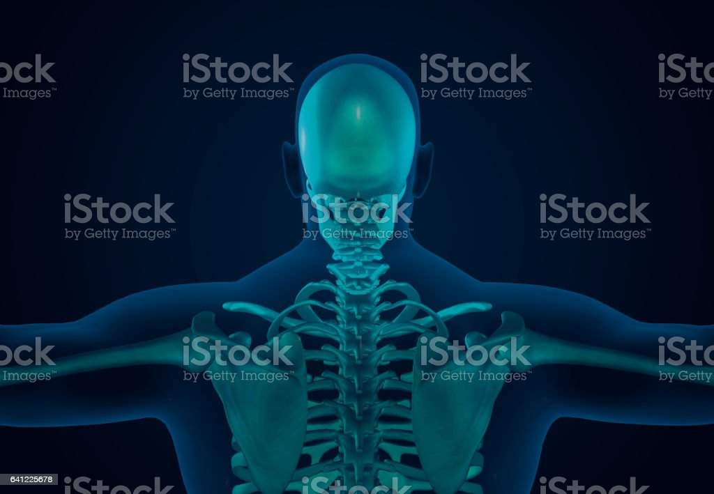 X-Ray Human Skeletal System vector art illustration