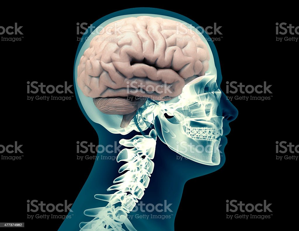 x-ray Human skeleton with brain stock photo