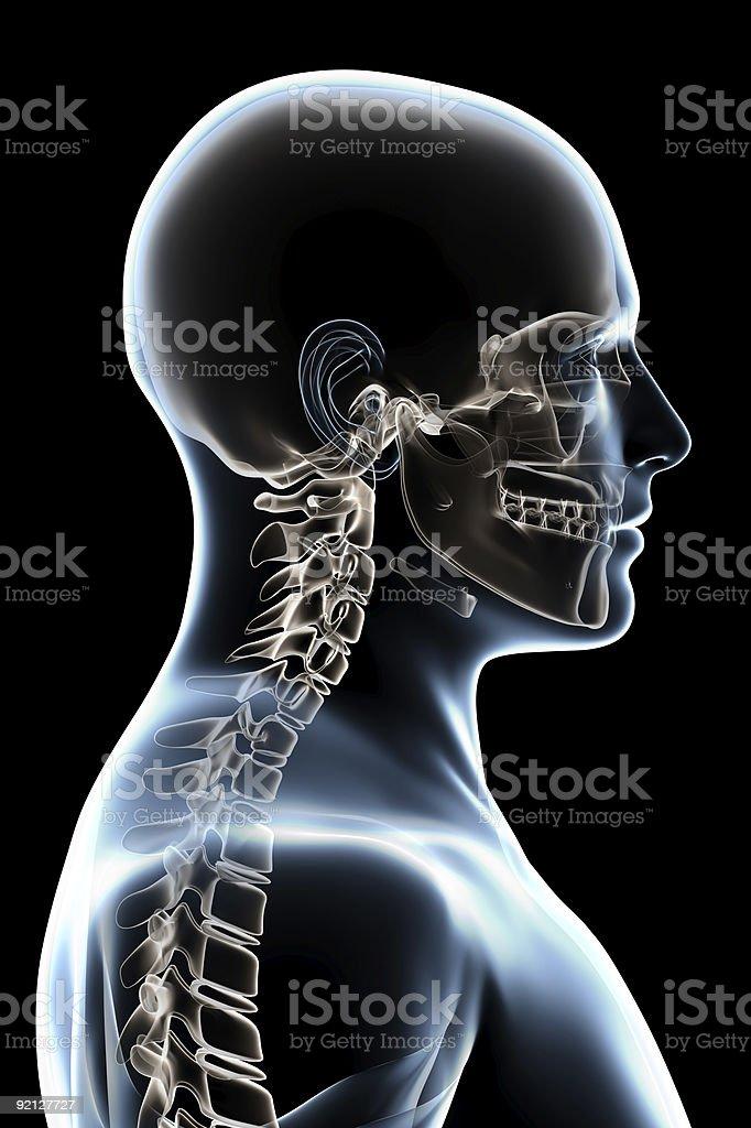 Fantastisch Nasenbein X Ray Anatomie Galerie - Anatomie und ...