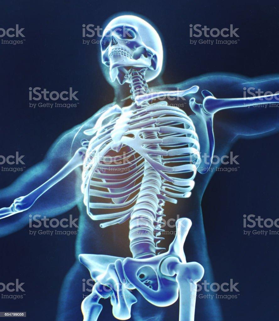 Xray Image Human Anatomy Torso Skeletal Structure Bones 3d