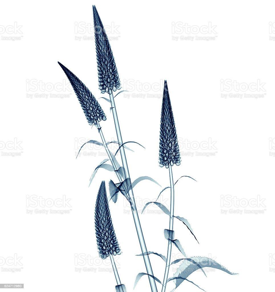 x-ray Bilder von einer Blume isoliert auf weiß Schwanenhals Verliert – Foto