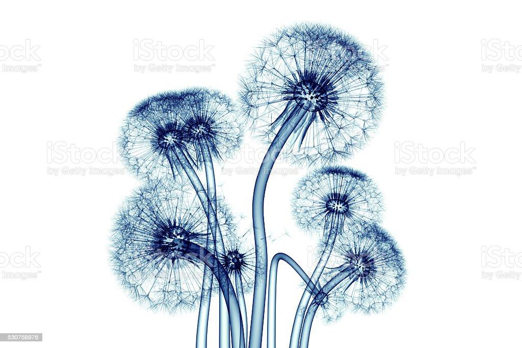 x-ray image of flower isolated on white , the Taraxacum dandel stock photo