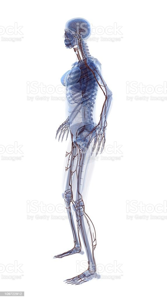 x-Ray look - Human Woman royalty-free stock photo