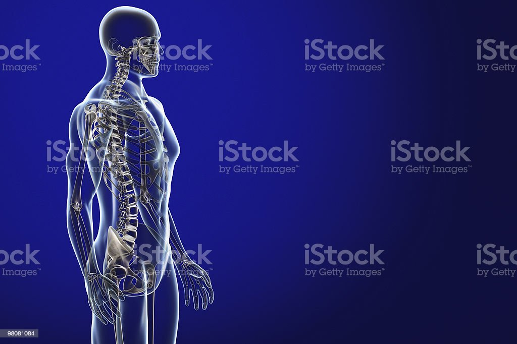 X-ray male anatomy over a blue background royalty-free stock photo