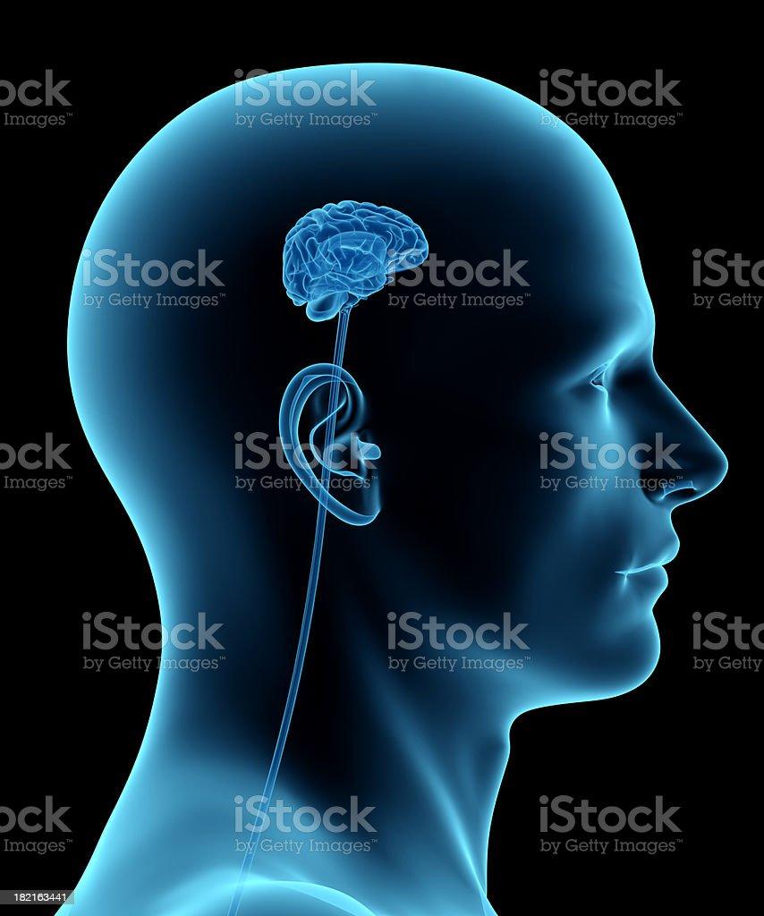 Brain Man Diagram - Enthusiast Wiring Diagrams •
