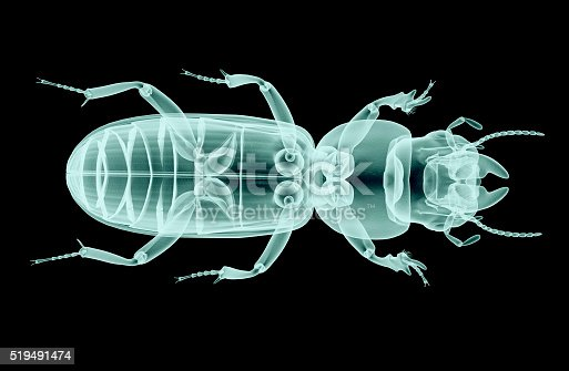istock xray of an insect isolated on black with clipping path 519491474