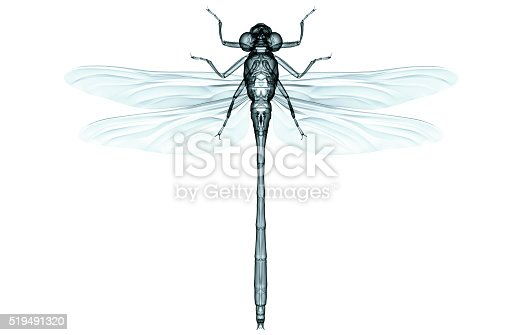 istock xray of an insect isolated on white with clipping path 519491320