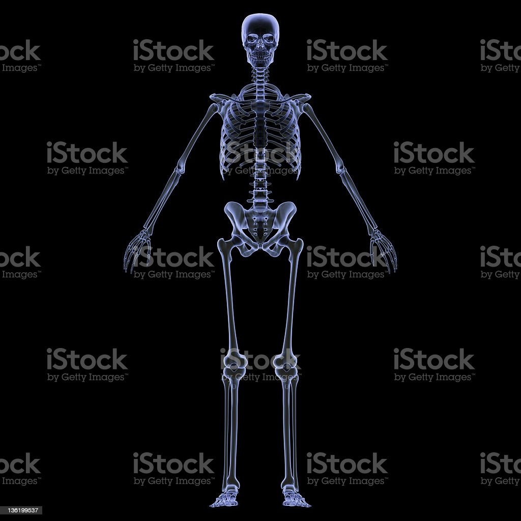 X-ray of human skeleton showing all of the bones stock photo