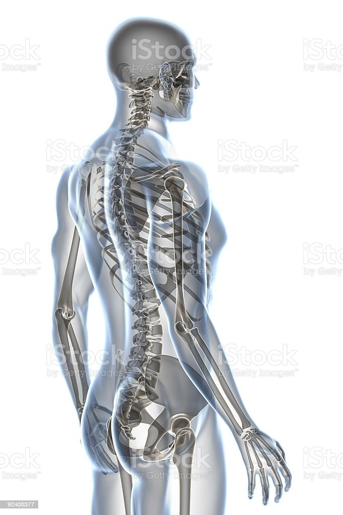 X-ray of male anatomy isolated on white background stock photo