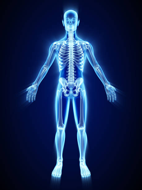 X-ray of skeleton X-ray of skeleton spine body part stock pictures, royalty-free photos & images