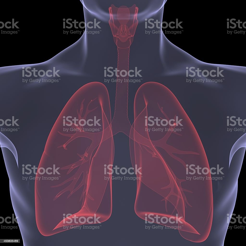 X-Ray picture of a person. Sore digestion stock photo