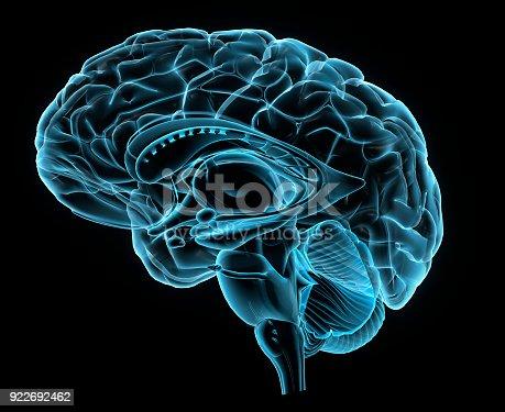 istock X-ray Side View of Human Brain 922692462