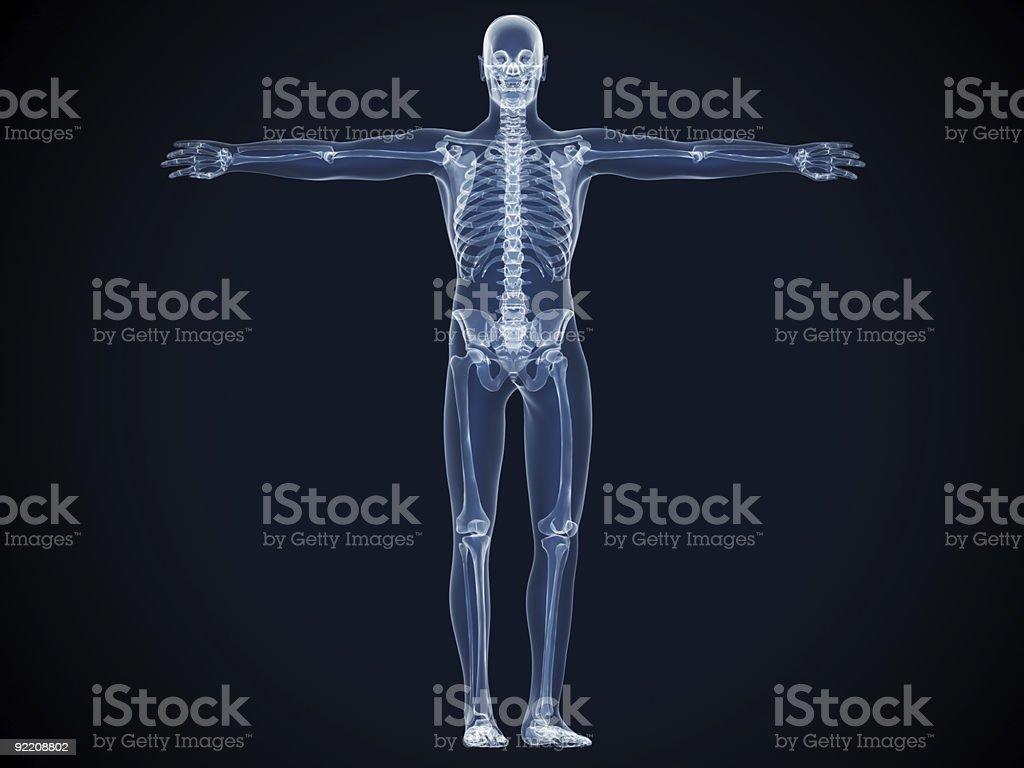 X-Ray Skeleton Man stock photo