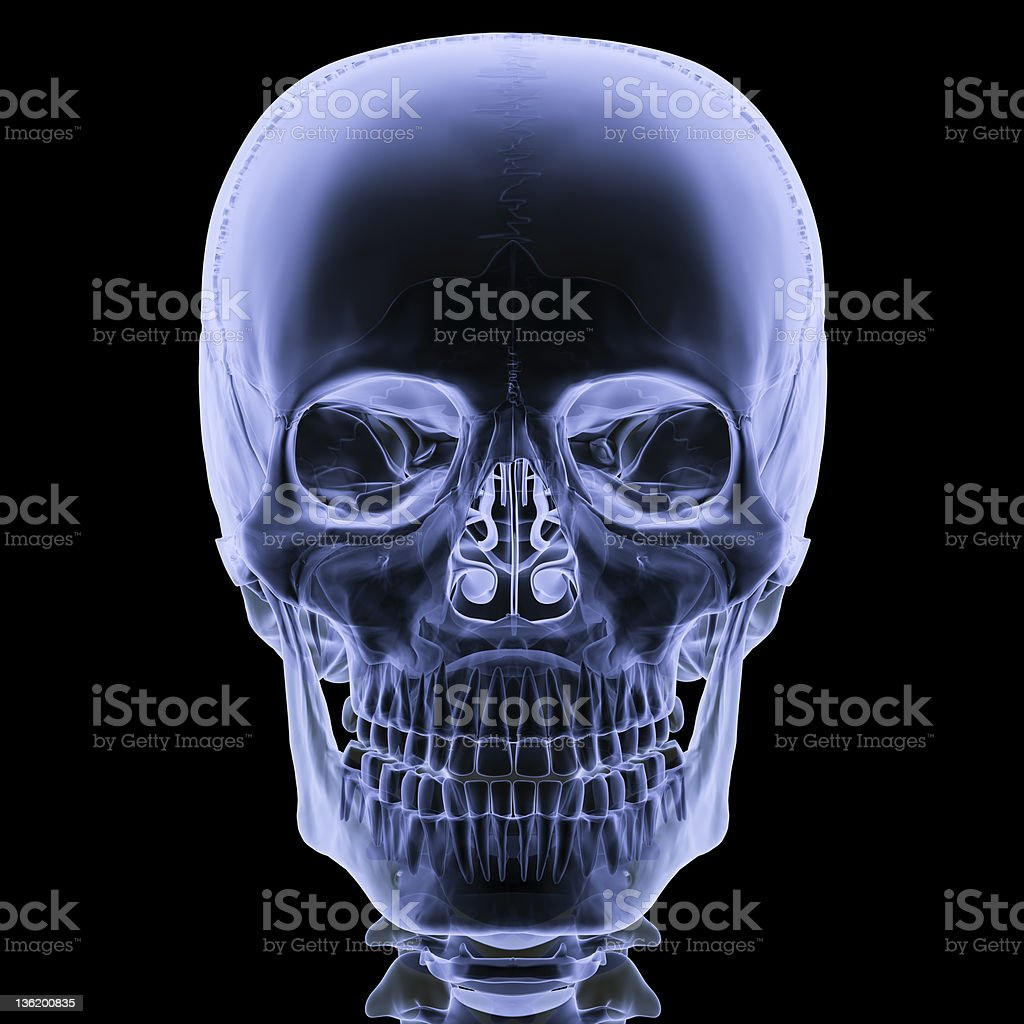X-ray skull front view stock photo