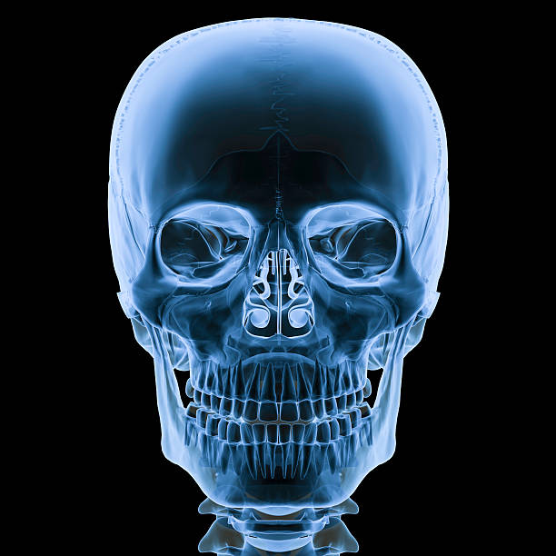 X-ray skull front view Digital medical illustration: X-ray human skull Anterior (front) view.  human skull stock pictures, royalty-free photos & images