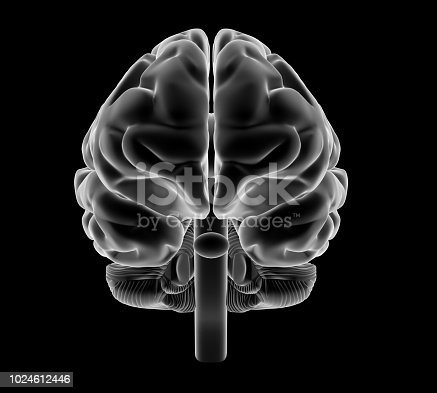 Human brain rendered in x ray style shading.