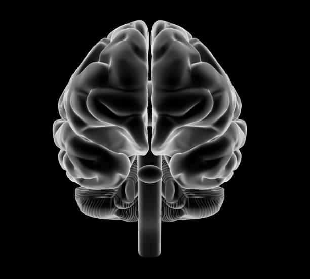 X-ray style brain. stock photo