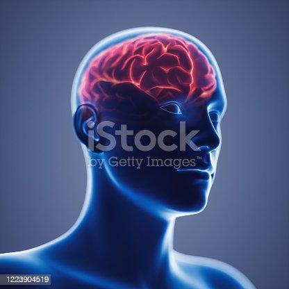 3D illustration of human brain.