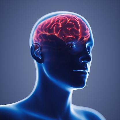 692684668 istock photo X-Ray View Of Human Brain 1223904519