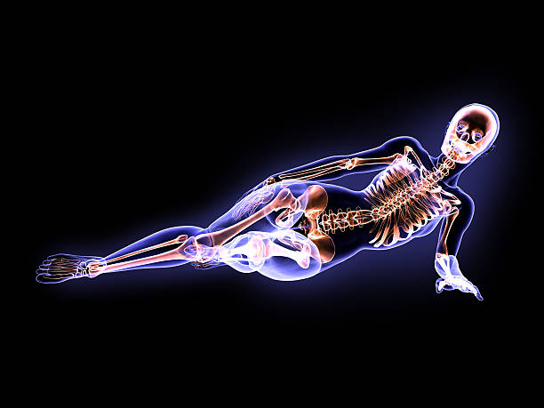 x-ray woman lying on the ground - naked women with animals stock photos and pictures