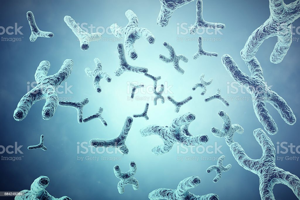 XY-chromosomes on grey background, scientific and biology concept with stock photo