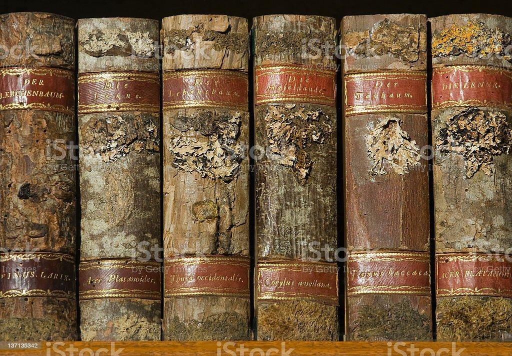Xylotheca wooden books at the shelf royalty-free stock photo