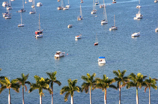 Yachts and palms stock photo
