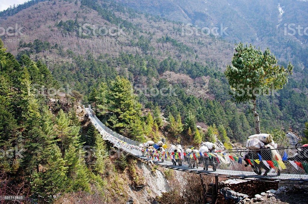Yak on the bridge   in Nepal stock photo