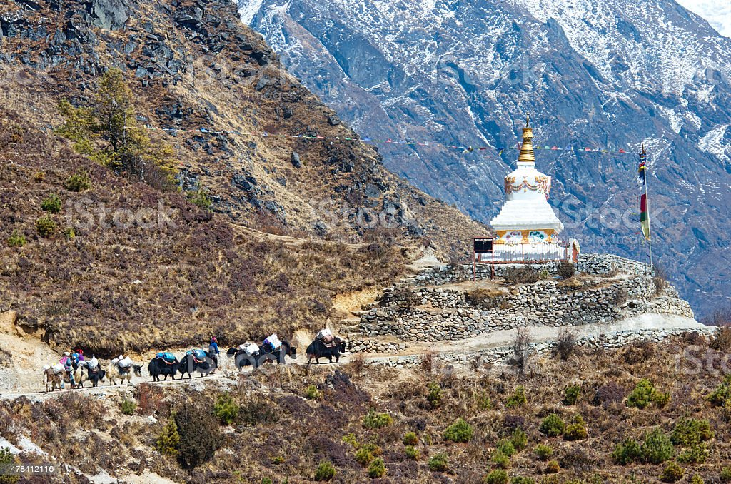 Yak on the trail  in Nepal stock photo