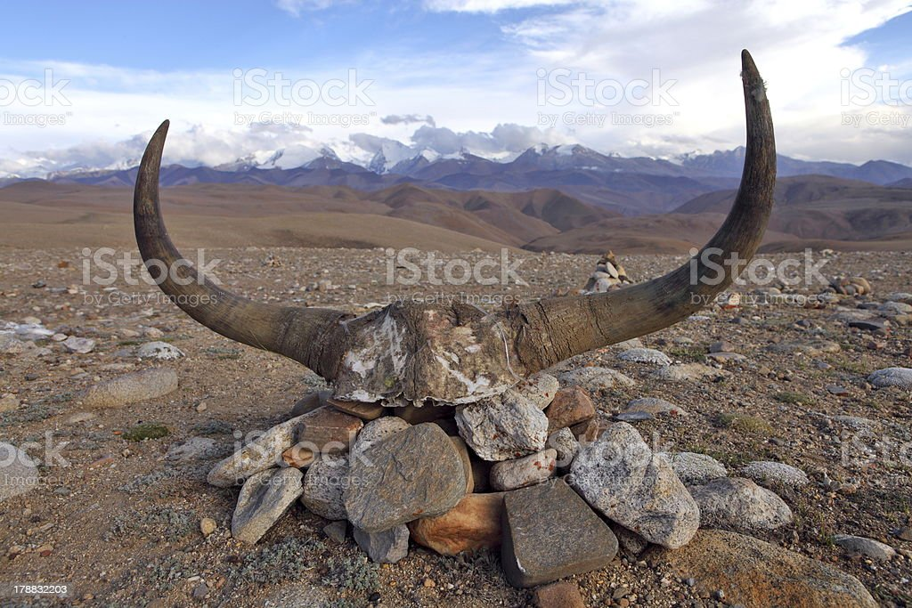 Yak skull decorated with Buddhist mantras stock photo